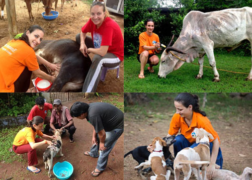 Steph treating animals at WAG in Goa, India