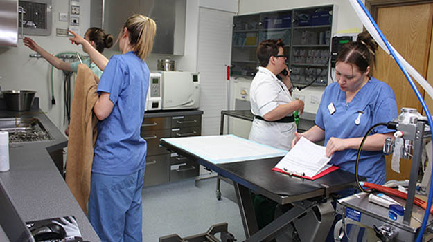 RCVS diploma in advanced veterinary nursing