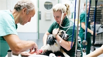 What is the difference between a vet and a vet nurse?