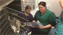A passion and career in veterinary nursing