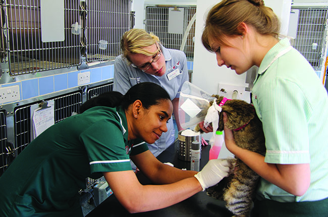 The different types of veterinary nursing roles | Vet Record