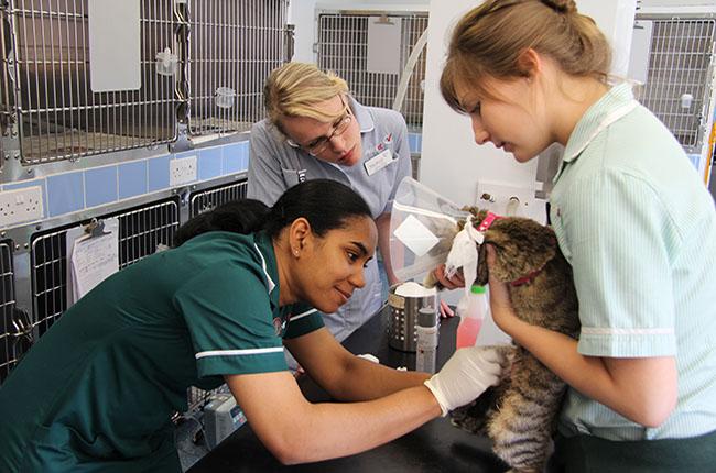 Starting A Career In Veterinary Nursing Vet Record Careers