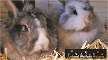 Promoting rabbit welfare in the veterinary industry
