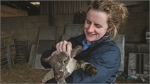 Emily Gascoigne on the various opportunities available as a sheep vet