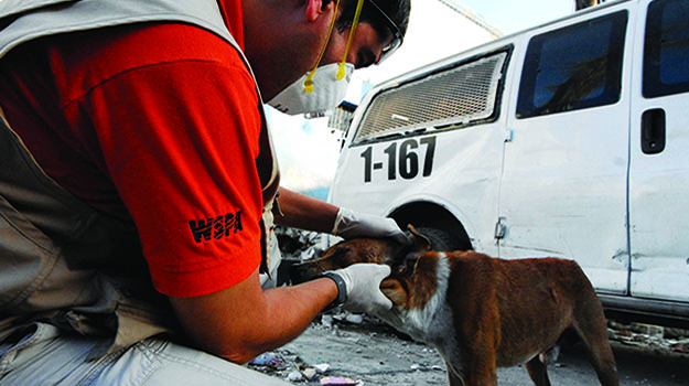 Helping animals in disaster zones