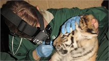 A bit wild: the work of a zoo vet