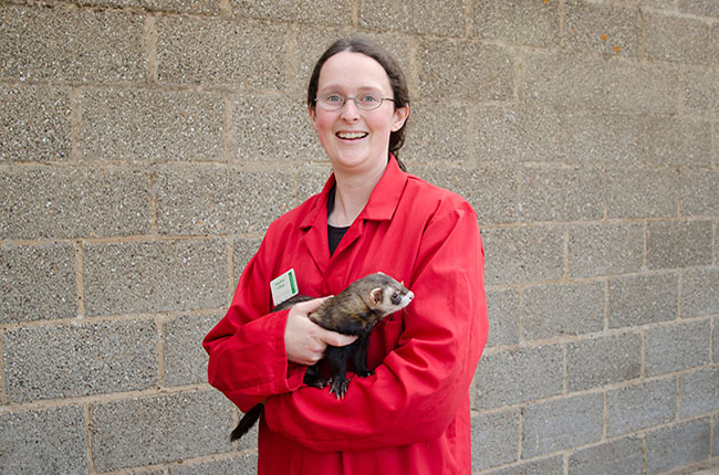 Isobel Richards with a ferret