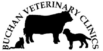 Buchan Veterinary Clinic logo