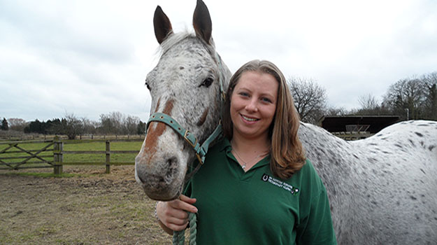 Exemplary pass rate for equine diploma nurses