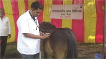 Combining direct treatment of horses in India with research into disease