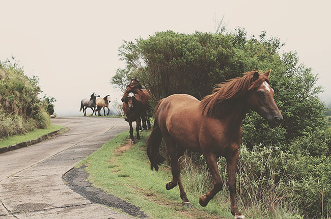 Stock image of horses running