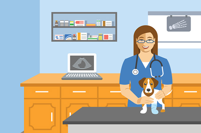 How to become a vet or vet nurse