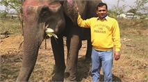 A career as an elephant vet